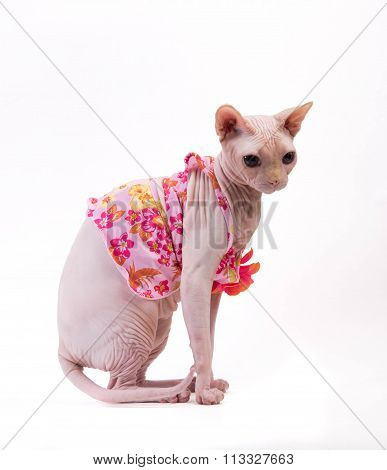 Sphynx Cat In Pink Dress On White Background