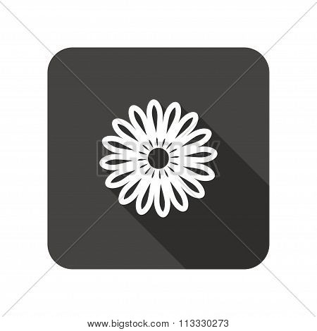 Camomile flower icons. Floral symbol. Rounded square flat icon with long shadow. Vector