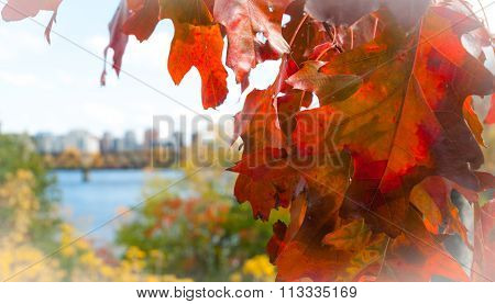 Red oak leaf foreground, city of Ottawa blurred background.