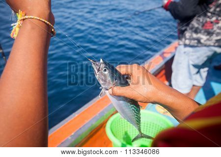 Fisherman Holding Tuna Fish On Hand With Hook On The Boat In Andaman Sea