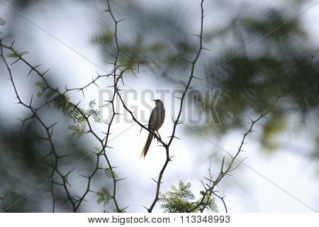 Bird on a Spiky Branch