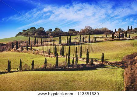 Cypress Trees Scenic Road. Siena, Tuscany, Italy.
