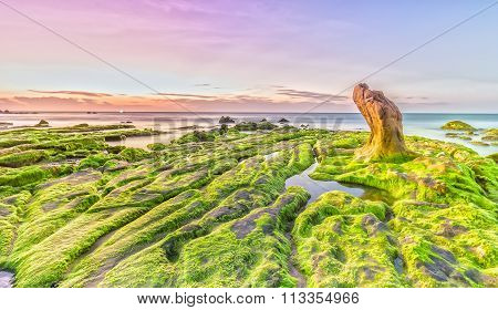Beach grass jelly moss dawn on summer day