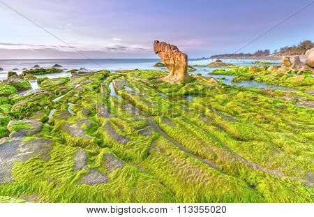 Beach moss dawn Co Thach