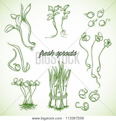 Fresh sprouts plants set. Isolated elements. Vector hand drawn illustration