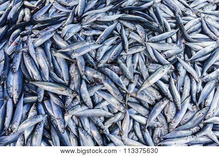 Abundance of fresh fish on market display.