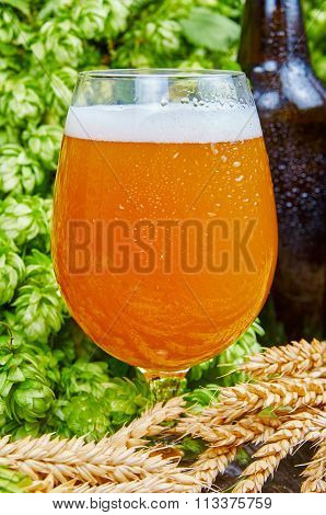 Wheat Beer In Glass