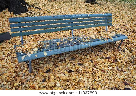 Bench in Fall
