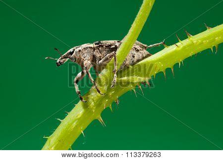 Beetle Sitting On Twig