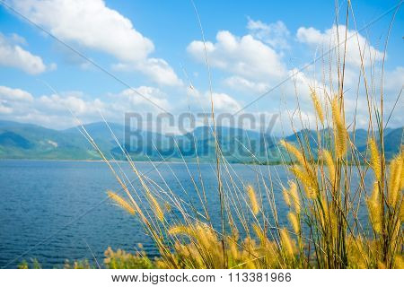 Awn Of Reed Flower.