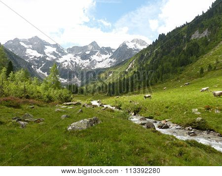 Mountain scene with cows, torrent and glaciers