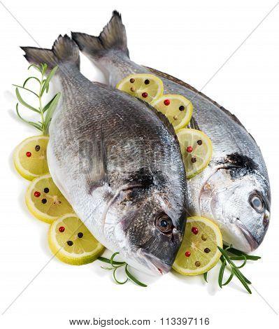 Uncooked Dorada Fishes
