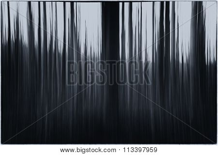 A Black And White Photo Of A Slow Shutter Speed Of Leaves And Trees In A Forest With A Strong Vintag