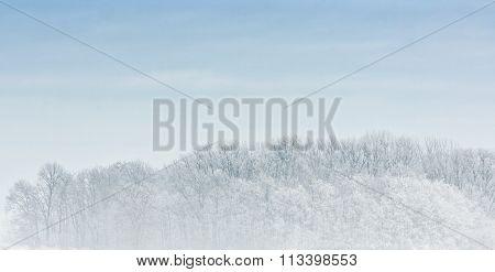 Winter Scene On A Foggy Morning