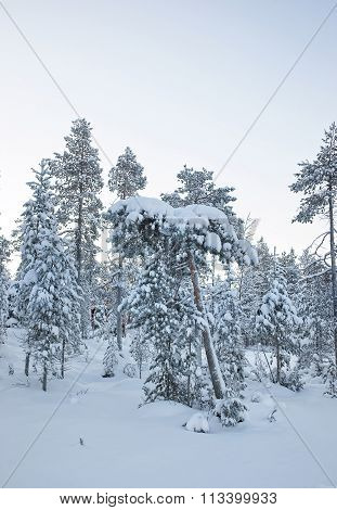 Hardly seen Cottage among the snow covered forest in Ruka in Finland on the Arctic pole circle in winter
