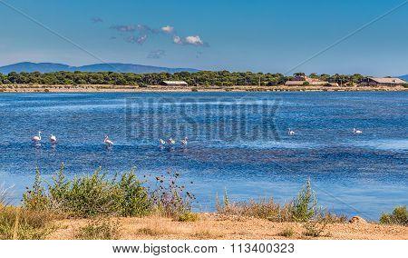 Giens Peninsula,salt Pan,flamingos-hyeres,france