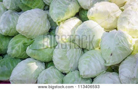 Green And White Cabbage