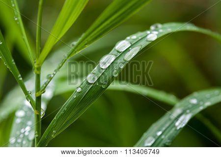 Green Grass Close Up.