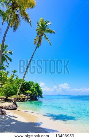 Paradise Tropical Beach