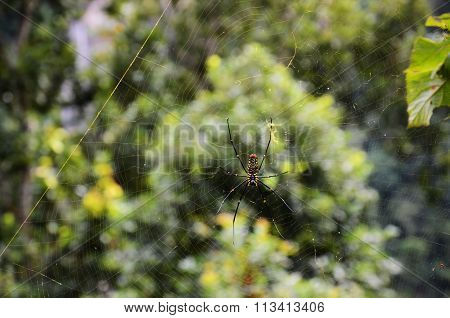 Close-up spider in a web