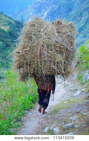 Woman carrying pile of hay on her back