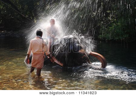 Indian Elephant Playing In The River