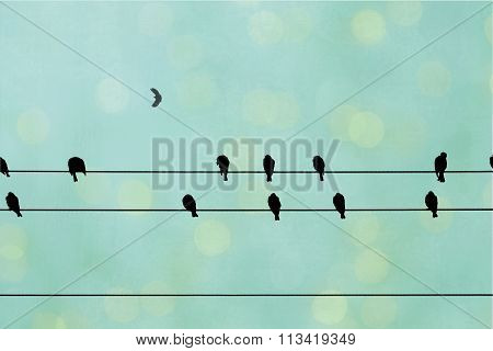 Black birds on a wire.