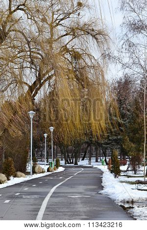 Winter In The Park, Snow And Bare Trees