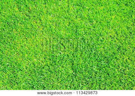 Green grass natural background