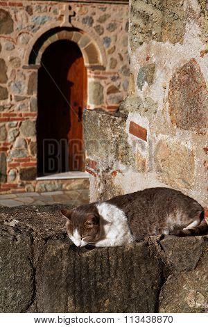 Cat Sleeping In A Monastery, Meteora, Greece