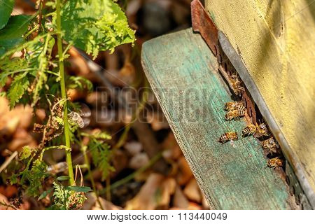 Hive In An Apiary With Bees Flying To The Landing Board In A Garden In Autumn