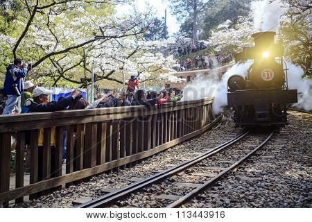 Alishan Forest Train In Alishan National Scenic Area During Spring Season. People Can Seen Exploring
