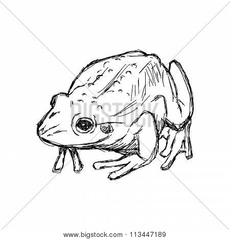 Illustration Vector Hand Drawn Doodle Toad Isolated On White.