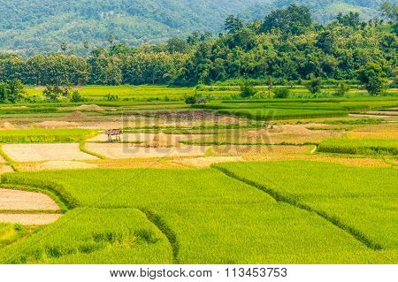 Asian rice field after harvest in Nan province, Thailand