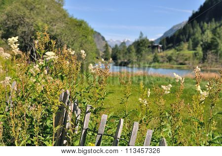 Greenery Lanscape In Mountain