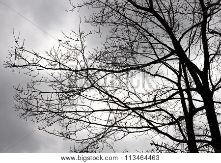 Branch Of Tree With Cloudy Sky.
