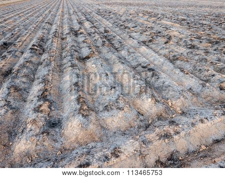 Burnt cultivated field with furrows prepared for next plantation