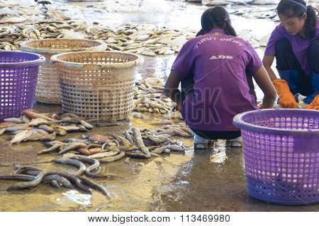 Sell Fresh Fish