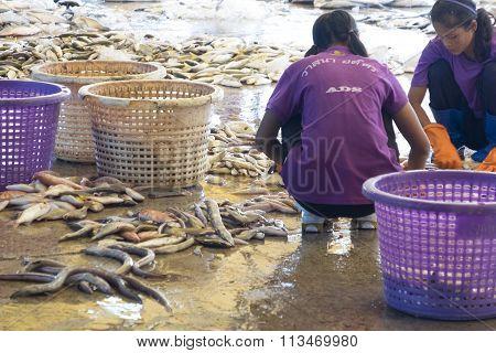 Sell Fresh Fish