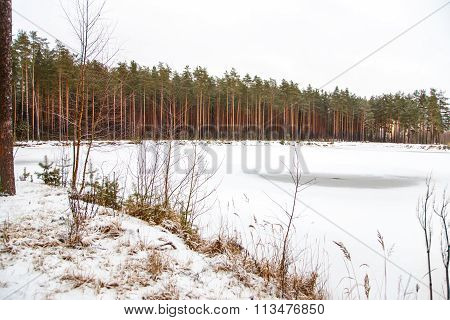 Winter Landscape Of Forest Frozen Lake