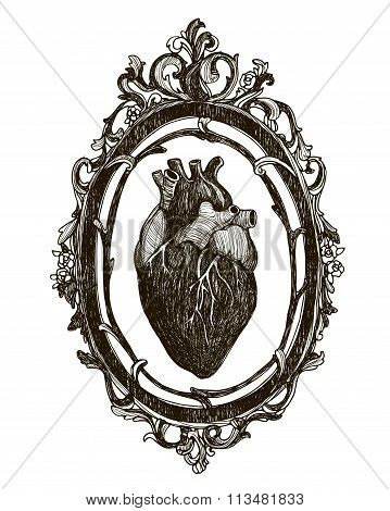 Human anatomical heart