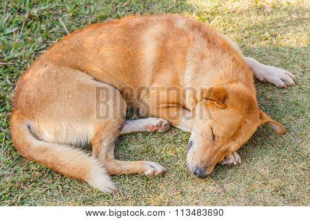 Dog Sleeping On Grass