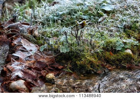 Frost The Water's Edge In A Winter Landscape, Low Key, Dark Background, Spot Lighting, And Rich Old