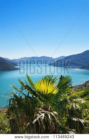 Panoramic of Lake Maggiore in Ticino, Switzerland; in the foreground a palm tree; blue sky