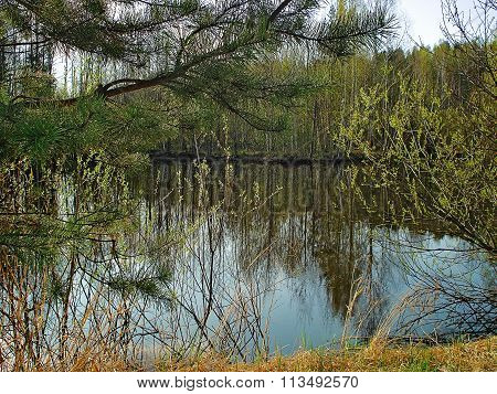 Early Spring Landscape With Pond