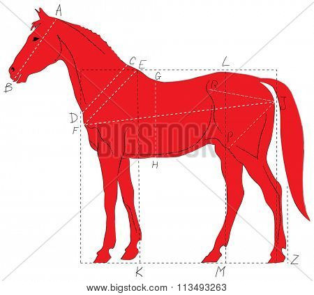 Horse profile with marked proportions. Vector illustration. Way of learning how to draw horse.