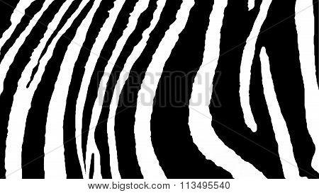 Skin of a Zebra.  Background African motifs.