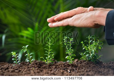 Businessman's Hands Protecting Plants Growing On Land
