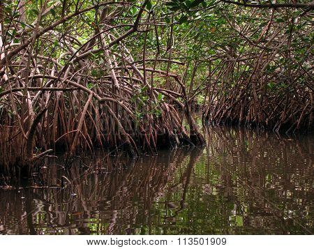 Mangrove Multiplied