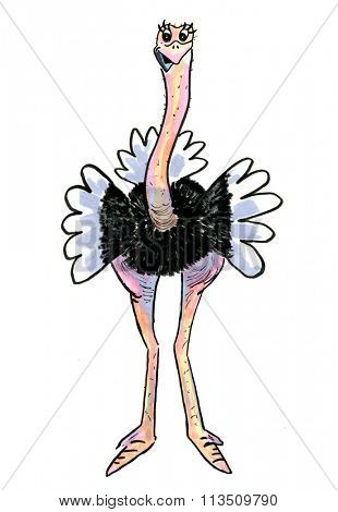 Cartoon of funny hand drawn Ostrich isolated over white background